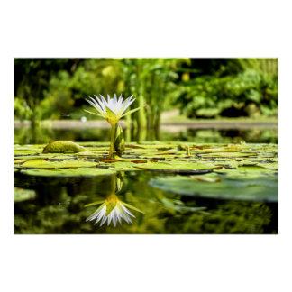 Wasser Lilly im botanischen Garten Poster