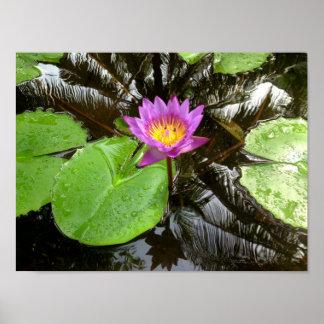Wasser lilly poster