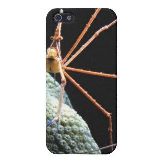 WASSER-WANZE 2iPHONE iPhone 5 Case