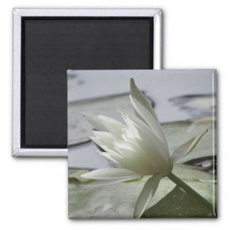 Wasserlilie-Foto-Magnet Quadratischer Magnet