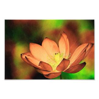 Wasserlilie im Öl Fotodruck