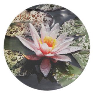 Wasserlilie - Platte Flache Teller