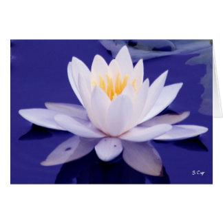 Wasserlilie-Wunder, S Cyr Karte