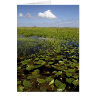 Wasserlilien und sawgrass in Florida-Sumpfgebieten Karte