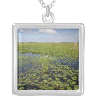 Wasserlilien und sawgrass in Florida-Sumpfgebieten Versilberte Kette