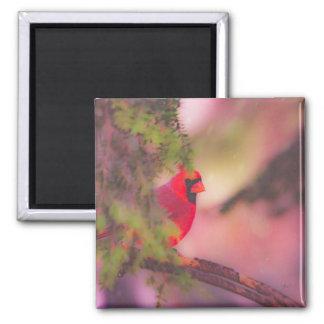 Watercolor-roter Kardinals-Magnet Quadratischer Magnet