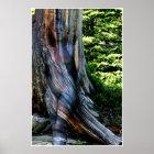 Weathered Swiss Pine by Johannes Stötter Poster