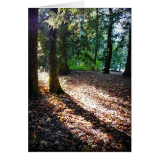 Weg im Holz-Sonnenschein und den Schatten Karte