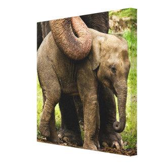 Weibliche asiatischer Elefant-Mutter, die ihr Baby Leinwanddruck