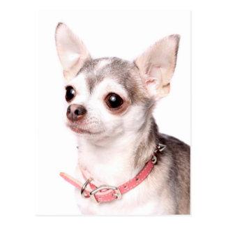 Weibliche Chihuahua mit rosa Kragen Postkarte
