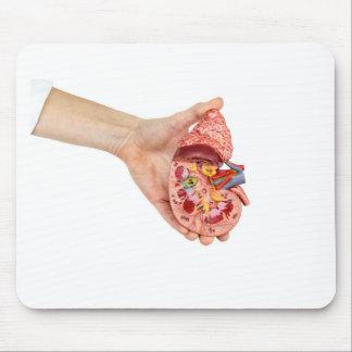 Weibliche Hand hält Modell der menschlichen Niere Mousepads