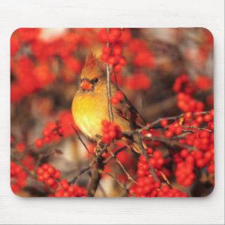 Weibliche und rote Beeren des Kardinals, IL Mauspad