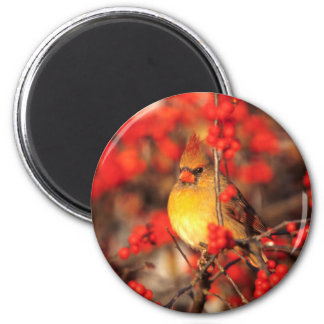 Weibliche und rote Beeren des Kardinals, IL Runder Magnet 5,1 Cm