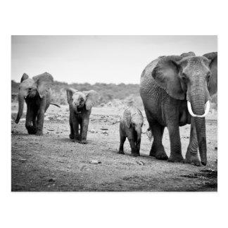 Weiblicher afrikanischer Elefant und drei Kälber, Postkarte