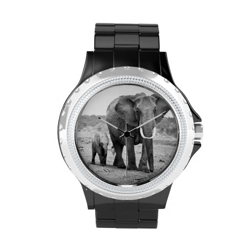 Weiblicher afrikanischer Elefant und drei Kälber, Uhren
