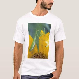 Weiblicher betender Mantis mit Eibeutel an T-Shirt