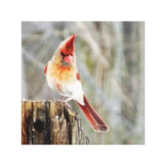 Weiblicher Kardinal im Winter Leinwanddruck