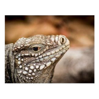 Weiblicher kleiner Kaiman-Felsen-Leguan Postkarte