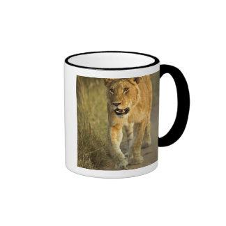 Weiblicher Löwe, der am Sonnenuntergang, Masai Ringer Tasse