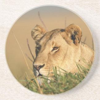 Weiblicher Löwe Untersetzer