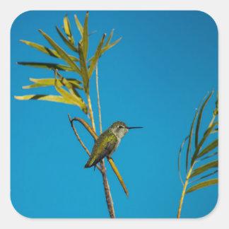 Weiblicher Rubinkehle Kolibri auf Baum Quadratischer Aufkleber
