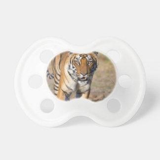 Weiblicher Tigress-anpirschendes Opfer Schnuller