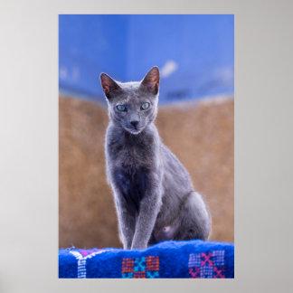 Weibliches Katzensitzen, Marokko Poster
