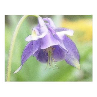Weiche blaue Blumenblätter - Aquilegia Postkarte