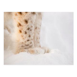 Weiche goldene Luchstatzen im Schnee Postkarte