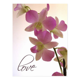 Weiche lila Orchidee Postkarte