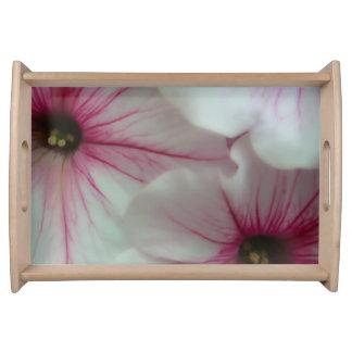 Weiche und empfindliche rosa Petunien Tablett