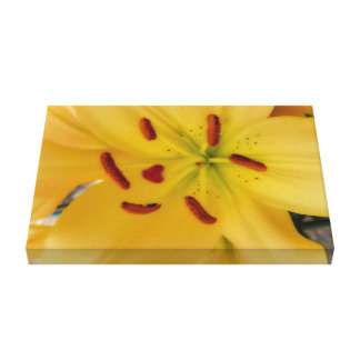 Weiche und träumerische gelbe Lilie Leinwanddruck