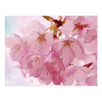 Weiche Vintage rosa Kirschblüten Postkarte