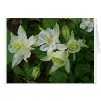 Weiche weiße Blumen auf einem Busch Karte
