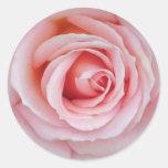 Weicher rosa Rosen-Aufkleber