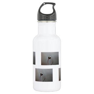 WeideCatkins nach Frühlingsregen Trinkflasche