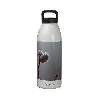 WeideCatkins nach Frühlingsregen Wiederverwendbare Wasserflaschen