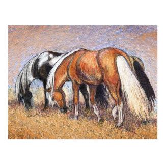 Weiden lassen der Pferde Postkarte