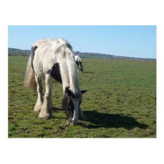Weiden lassen der Pferdepostkarte Postkarte