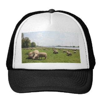 Weiden lassen der Schafe durch den Rhein Truckercap