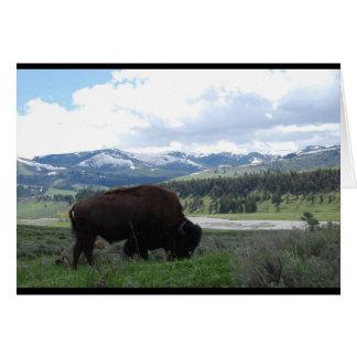 Weiden lassen des Büffels Karte