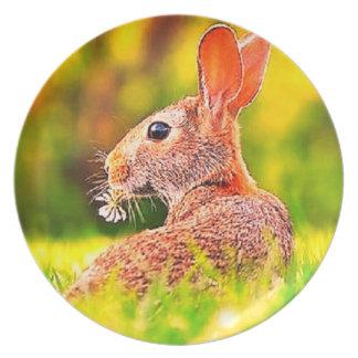 Weiden lassen im Feld Kaninchen-großen Teller