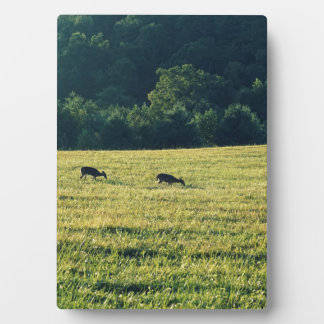Weiden lassende Rotwild Fotoplatte