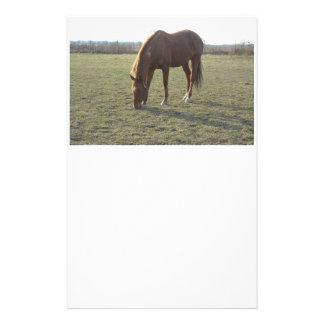 Weiden lassendes Pferd Briefpapier