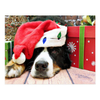 Weihnachten - Bernese Gebirgshund - Mya Postkarte