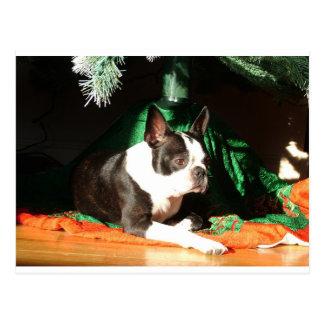 Weihnachten Bostons Terrier mit Pfeifer Postkarten
