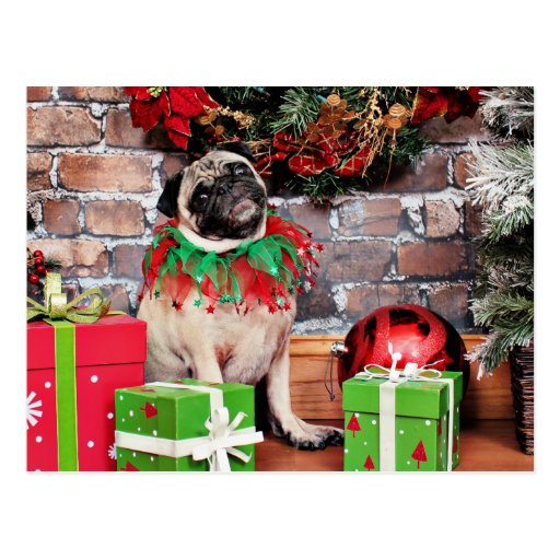weihnachten mops lilie lou postkarte zazzle. Black Bedroom Furniture Sets. Home Design Ideas