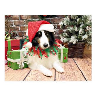 Weihnachten - Sheltie - Bandit Postkarte