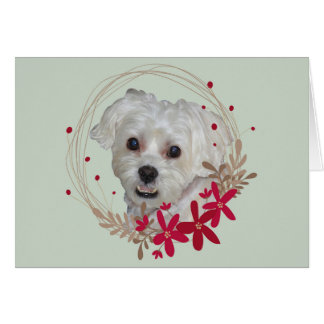 Weihnachten, weißer Hund vom Haustier Karte