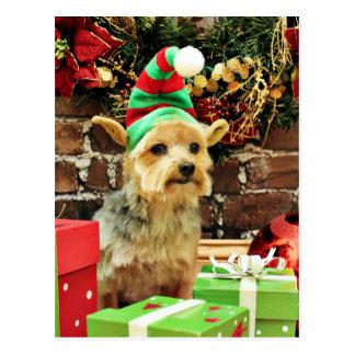 Weihnachten - Yorkshire Terrier - Vinnie Postkarte